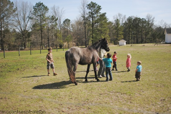 Horse Easter 2015